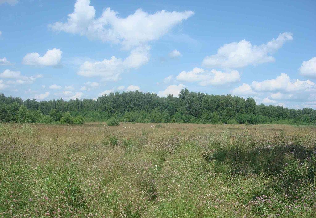 Земельный участок 206 соток