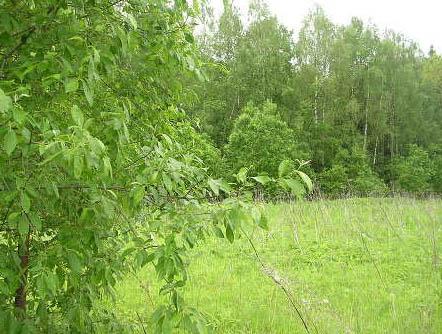 Земельный участок 6 соток