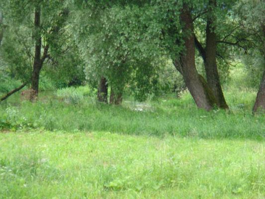 Земельный участок 35 соток