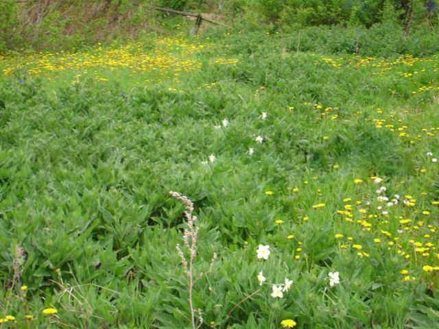 Земельный участок 60 соток