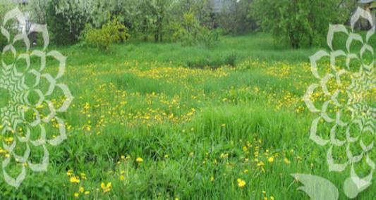 Земельный участок 16 соток