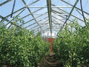 Загородная недвижимость и овощеводство