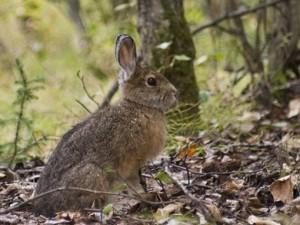 Охота на зайца на загородных земельных участках