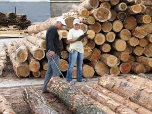 Коммерческие тендеры по продукции лесопильной промышленности