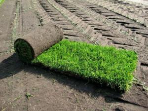Цена рулонных газонов для земельных участков по Киевскому шоссе