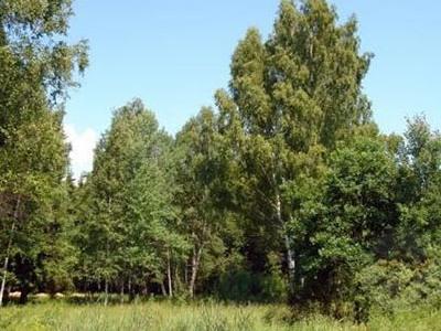 Земельный участок 32 соток, 14 км от МКАД, д. Бурцево