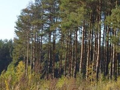 Земельный участок 25 соток, 22 км от МКАД, д. Верховье