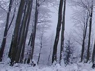 Земельный участок 67 соток, 10 км от МКАД, д. Зименки