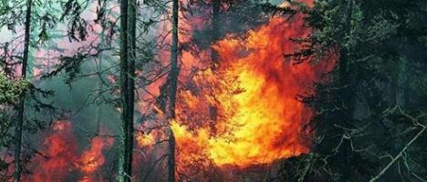 Пожары в Подмосковных лесах повлияют на их стоимость в будущем