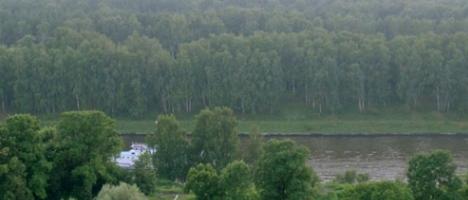 Химкинский лес покидают строители и защитники природы