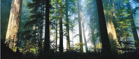 Согласие на залог права аренды земельного участка